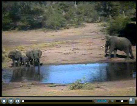 Elephant Cam
